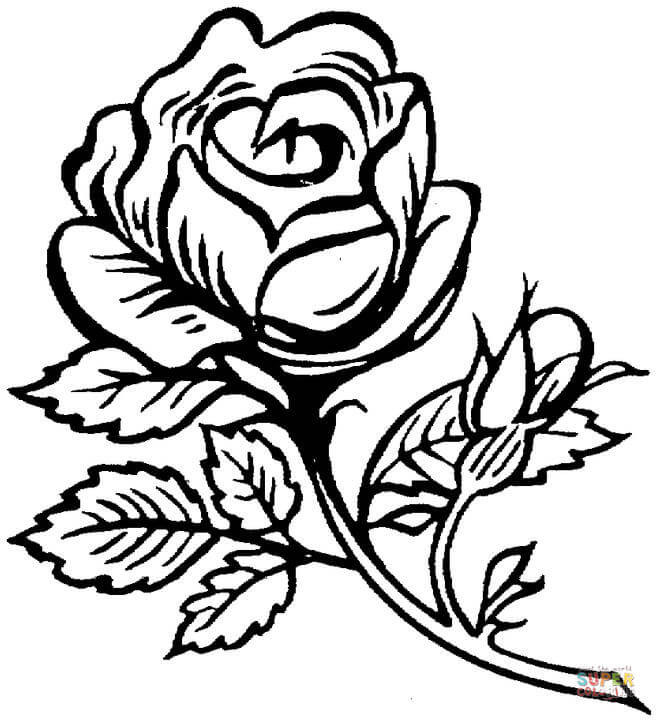 Best ideas about Free Coloring Pages Roses . Save or Pin Beautiful big rose coloring page Now.