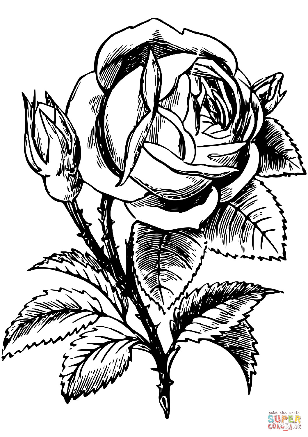 Best ideas about Free Coloring Pages Roses . Save or Pin Rose coloring page Now.