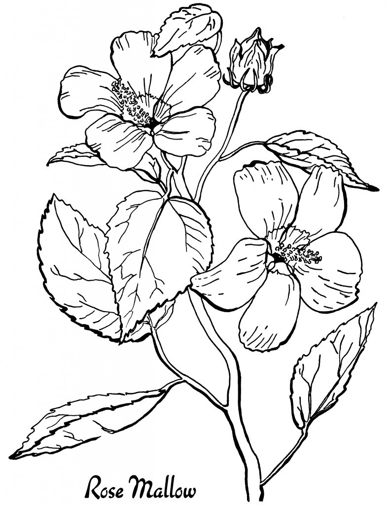 Best ideas about Free Printable Of Roses Coloring Pages For Girls Pinterest. . Save or Pin Free Roses Printable Adult Coloring Page The Graphics Fairy Now.