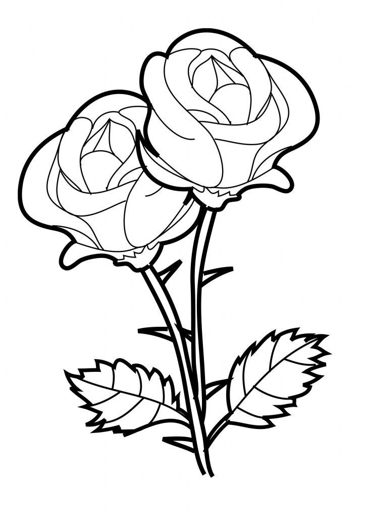 Best ideas about Free Printable Of Roses Coloring Pages For Girls Pinterest. . Save or Pin Free Printable Roses Coloring Pages For Kids Now.