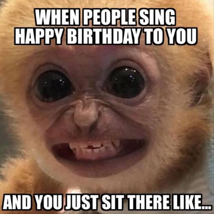 Best ideas about Funny Birthday Image . Save or Pin Funny The Day – 33 Pics Funny Now.