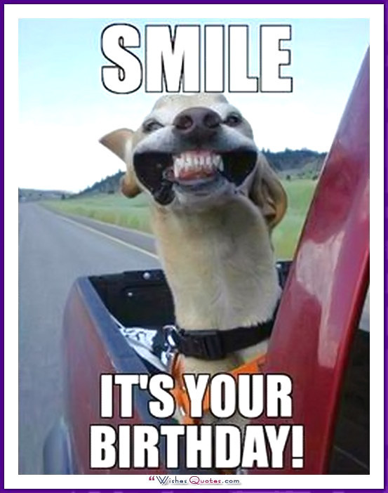 Best ideas about Funny Birthday Image . Save or Pin Happy Birthday Memes with Funny Cats Dogs and Cute Now.