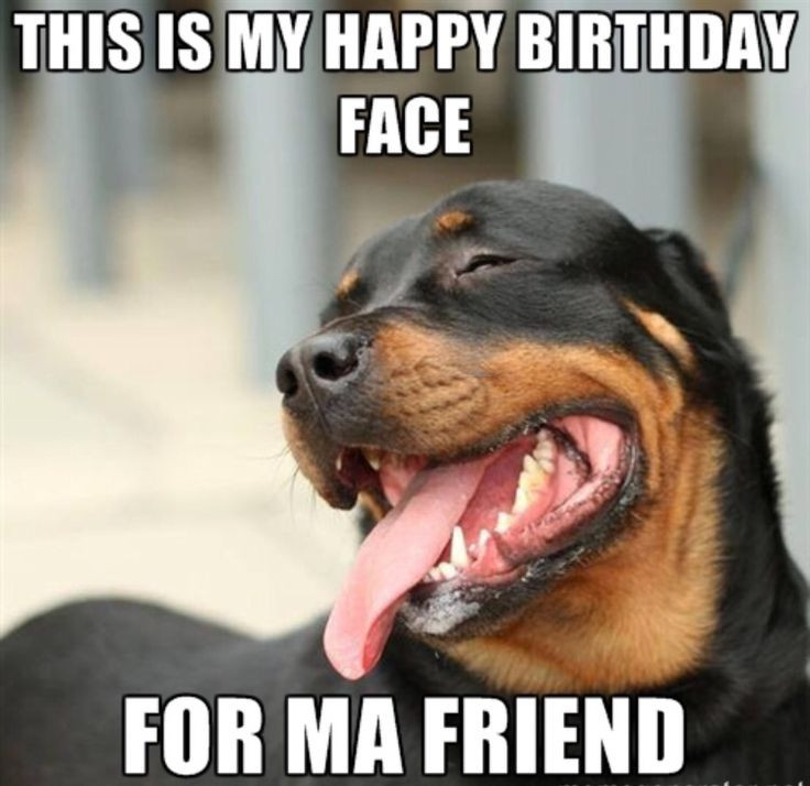 Best ideas about Happy Birthday Meme Funny Friend . Save or Pin 20 Funny Happy Birthday Memes Now.