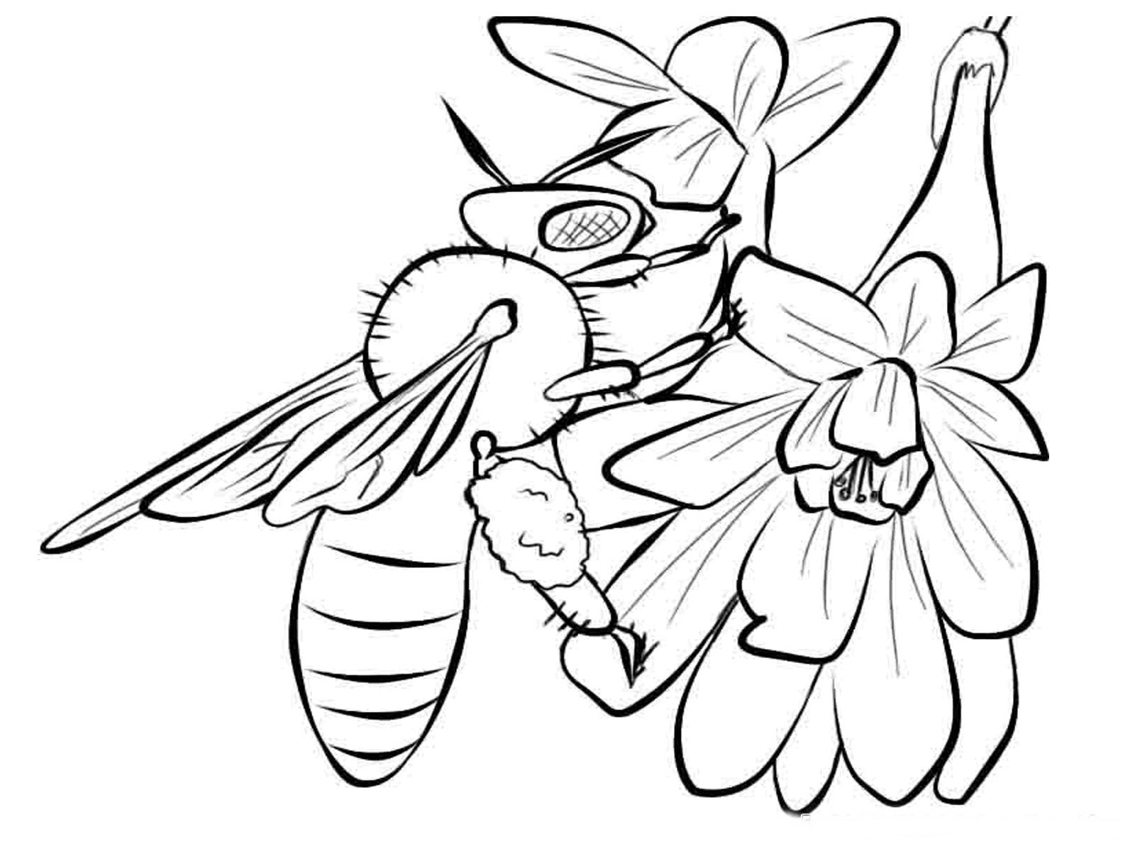 Best ideas about Honey Bee Coloring Pages For Kids . Save or Pin Bees Coloring Pages Realistic Now.