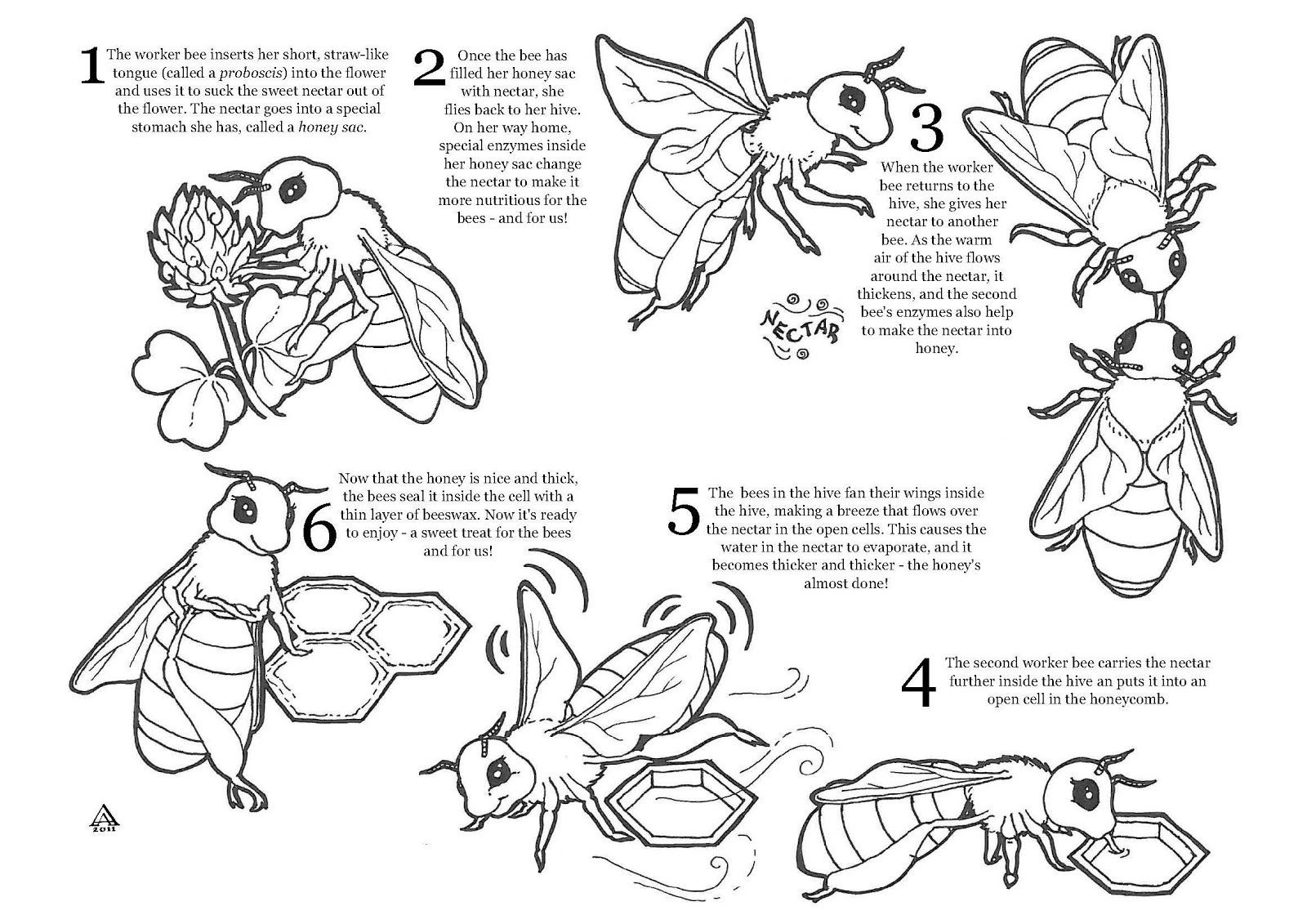Best ideas about Honey Bee Coloring Pages For Kids . Save or Pin Coloring Pages Honey Bees Coloring Home Now.