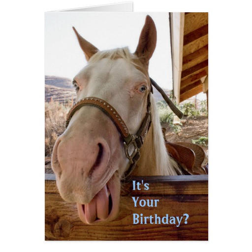 Best ideas about Horse Birthday Wishes . Save or Pin Horse Birthday Cards Now.