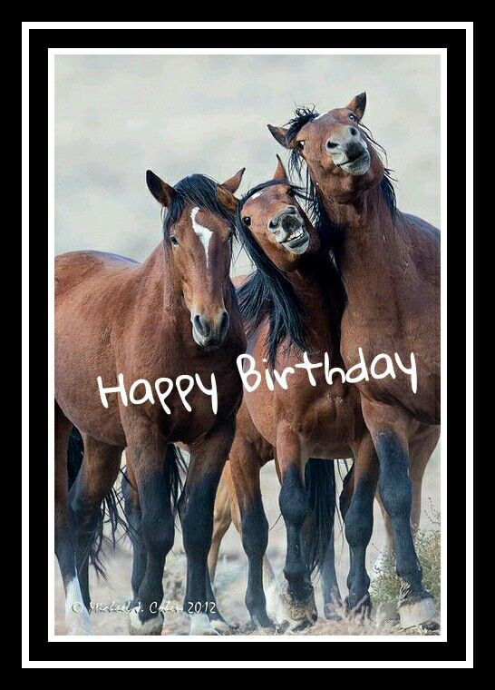 Best ideas about Horse Birthday Wishes . Save or Pin Horses happy birthday For others Pinterest Now.