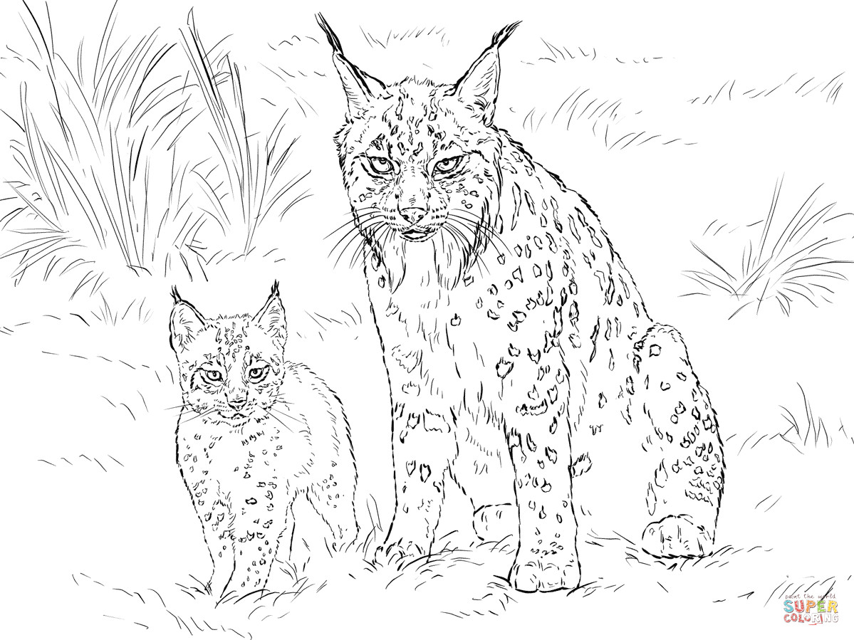 Best ideas about Lynx Coloring Sheets For Girls . Save or Pin Iberian Lynx Mother with Baby coloring page Now.