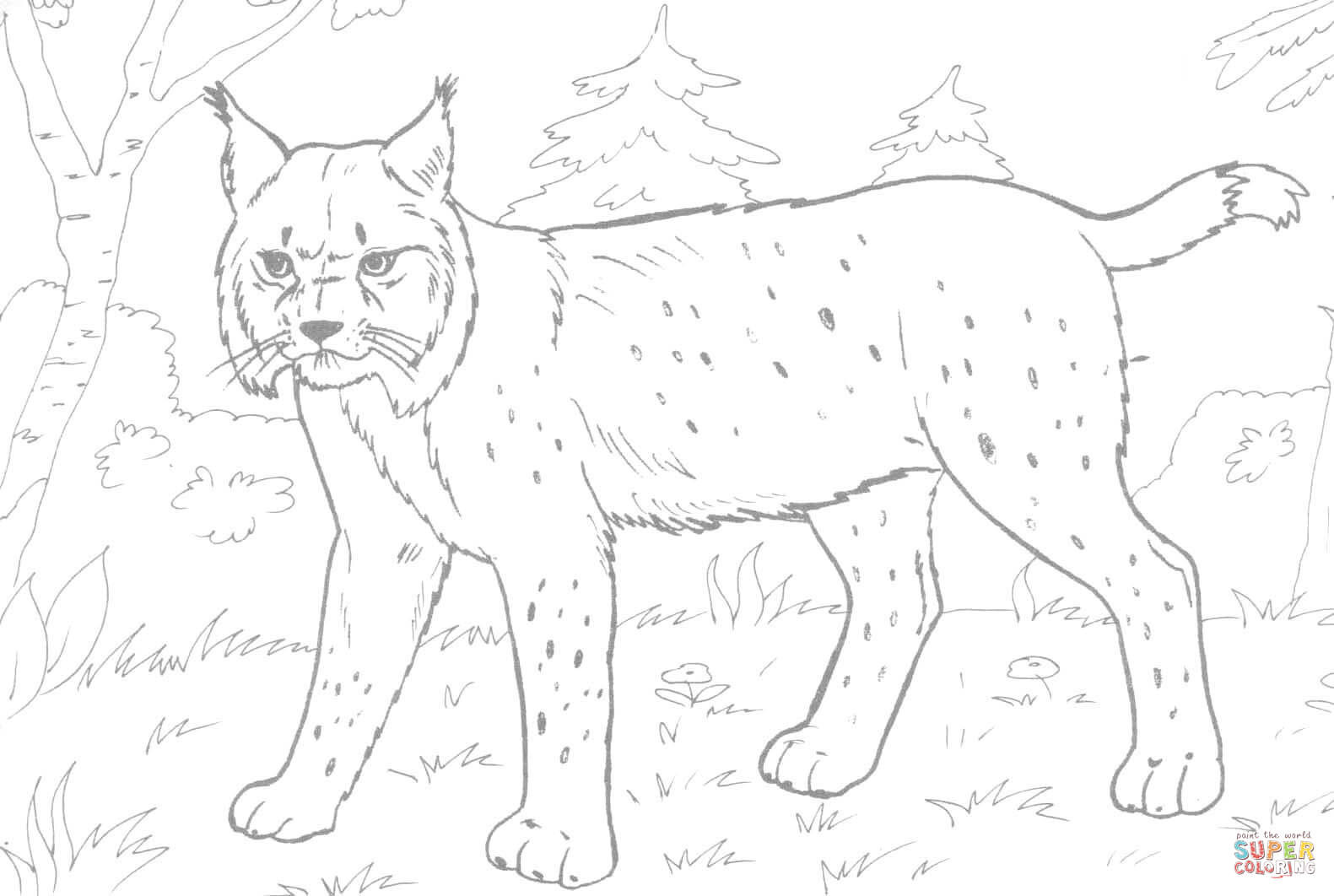 Best ideas about Lynx Coloring Sheets For Girls . Save or Pin Lynx in the Forest coloring page Now.