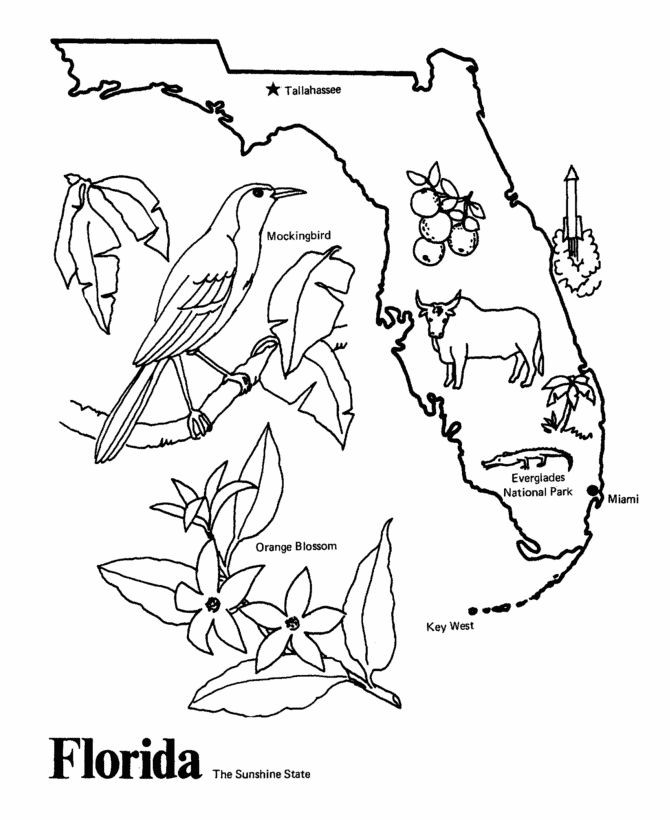 Best ideas about Map Of Wisconsin Preschool Coloring Sheets . Save or Pin Florida State outline Coloring Page I copy the image and Now.