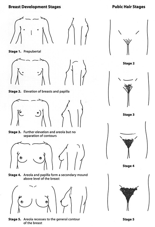 Best ideas about Pubic Hairstyles Female . Save or Pin Gastroenterology and Clinical Nutrition Growth charts Now.