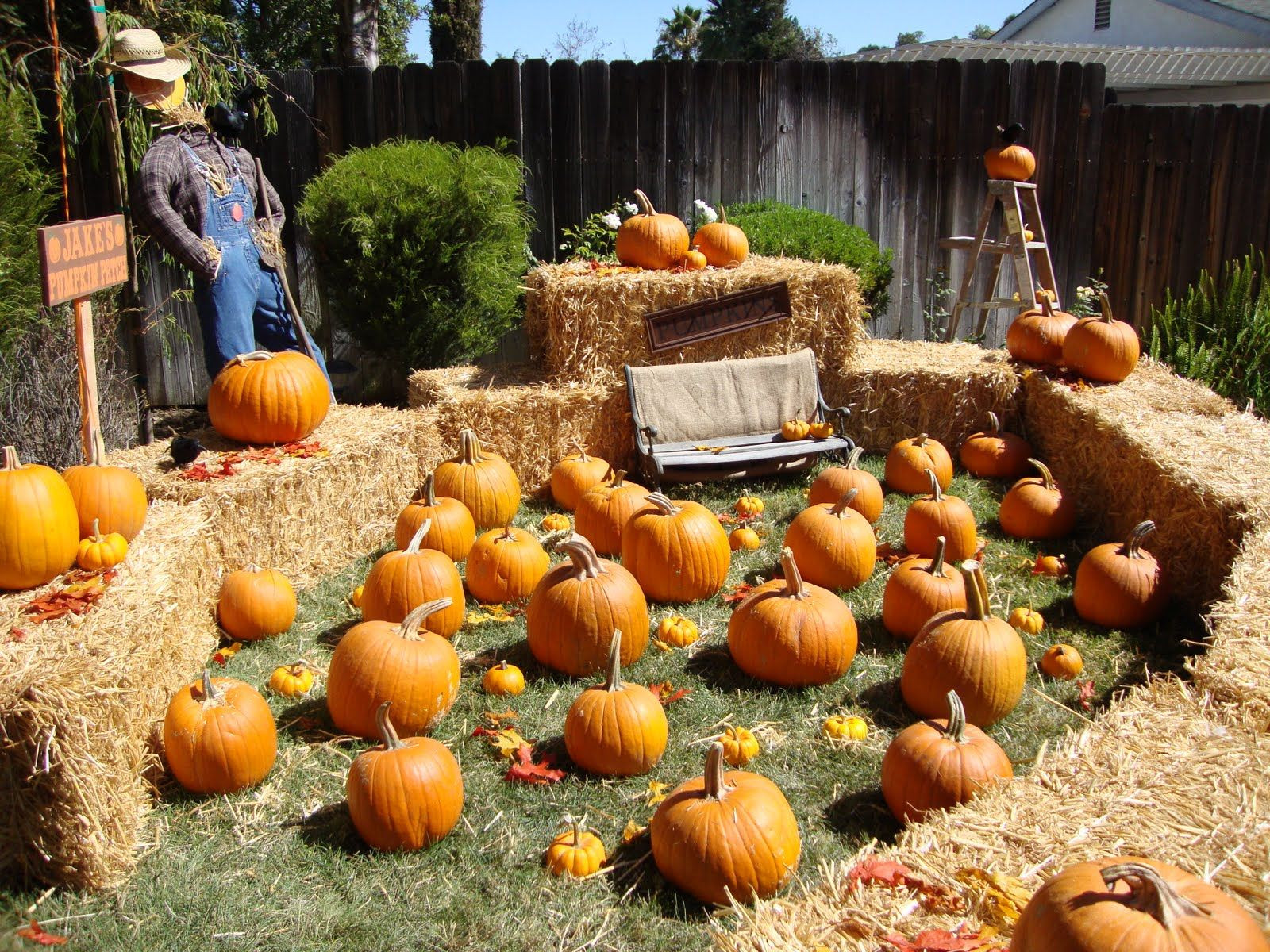 Best ideas about Pumpkin Patch Birthday Party . Save or Pin Too freaking cute The party has just moved to our yard Now.