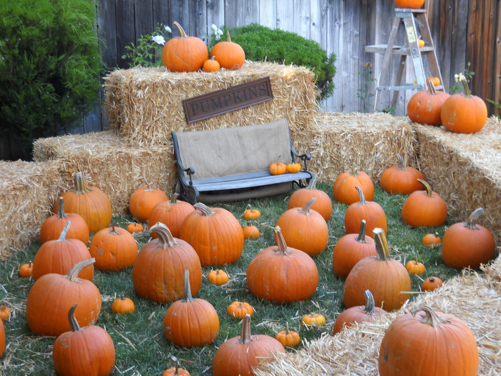 Best ideas about Pumpkin Patch Birthday Party . Save or Pin rosespetitemaison Baby Jake s First Birthday or Pumpkin Now.