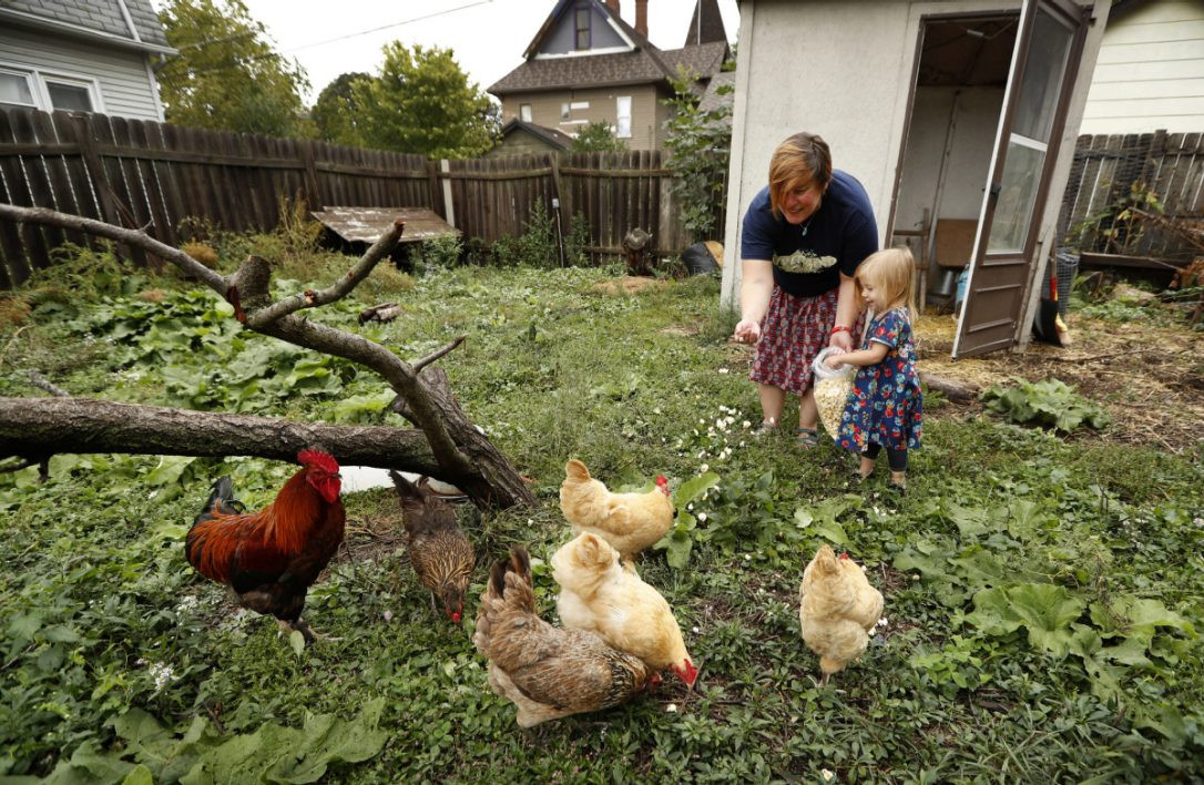 Best ideas about Raising Backyard Chickens . Save or Pin Backyard chicken trend leads to more salmonella infections Now.