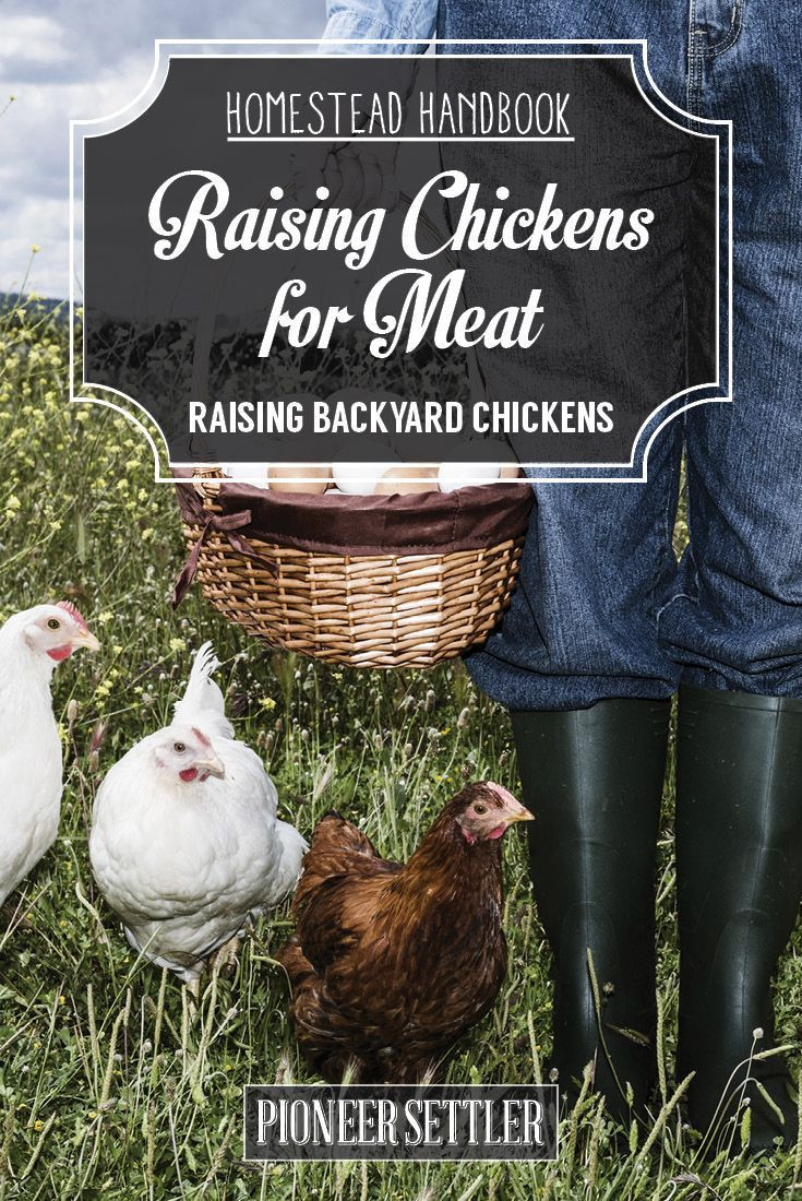 Best ideas about Raising Backyard Chickens . Save or Pin 1000 ideas about Raising Chickens on Pinterest Now.