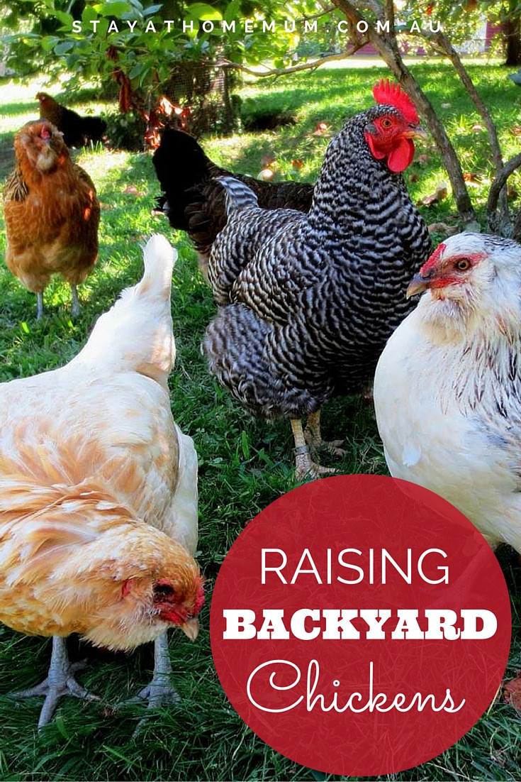 Best ideas about Raising Backyard Chickens . Save or Pin Keeping Backyard Chickens Stay at Home Mum Now.
