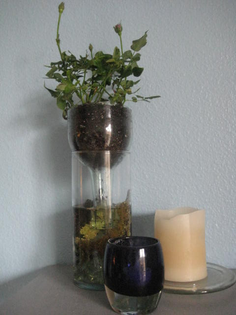 Best ideas about Self Watering Pots DIY . Save or Pin DIY Self Watering Wine Bottle Planter Now.