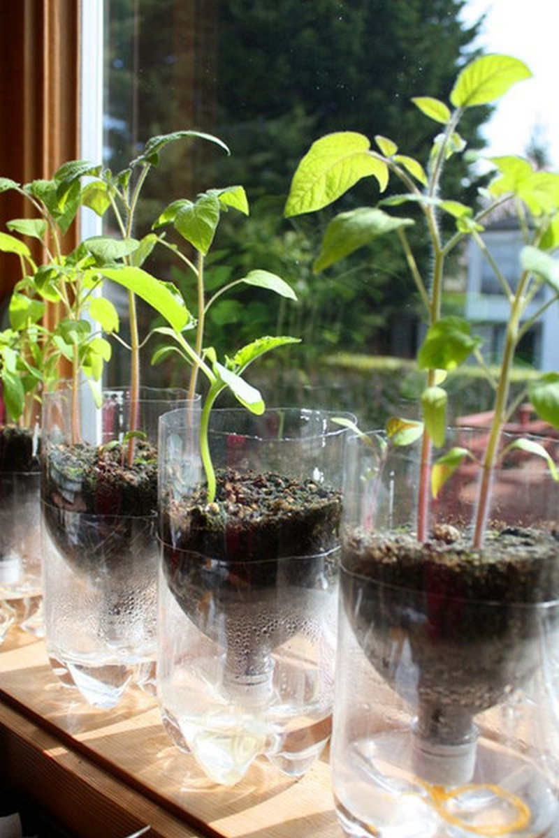 Best ideas about Self Watering Pots DIY . Save or Pin DIY Self Watering Seed Starter Pots – The Owner Builder Now.