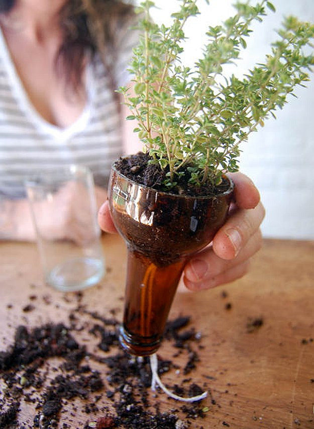 Best ideas about Self Watering Pots DIY . Save or Pin Self watering Planters Using Wine Bottles Now.