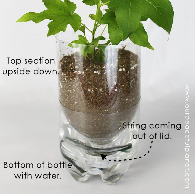 Best ideas about Self Watering Pots DIY . Save or Pin 15 DIY Self Watering Planters That You Can Craft Today Now.