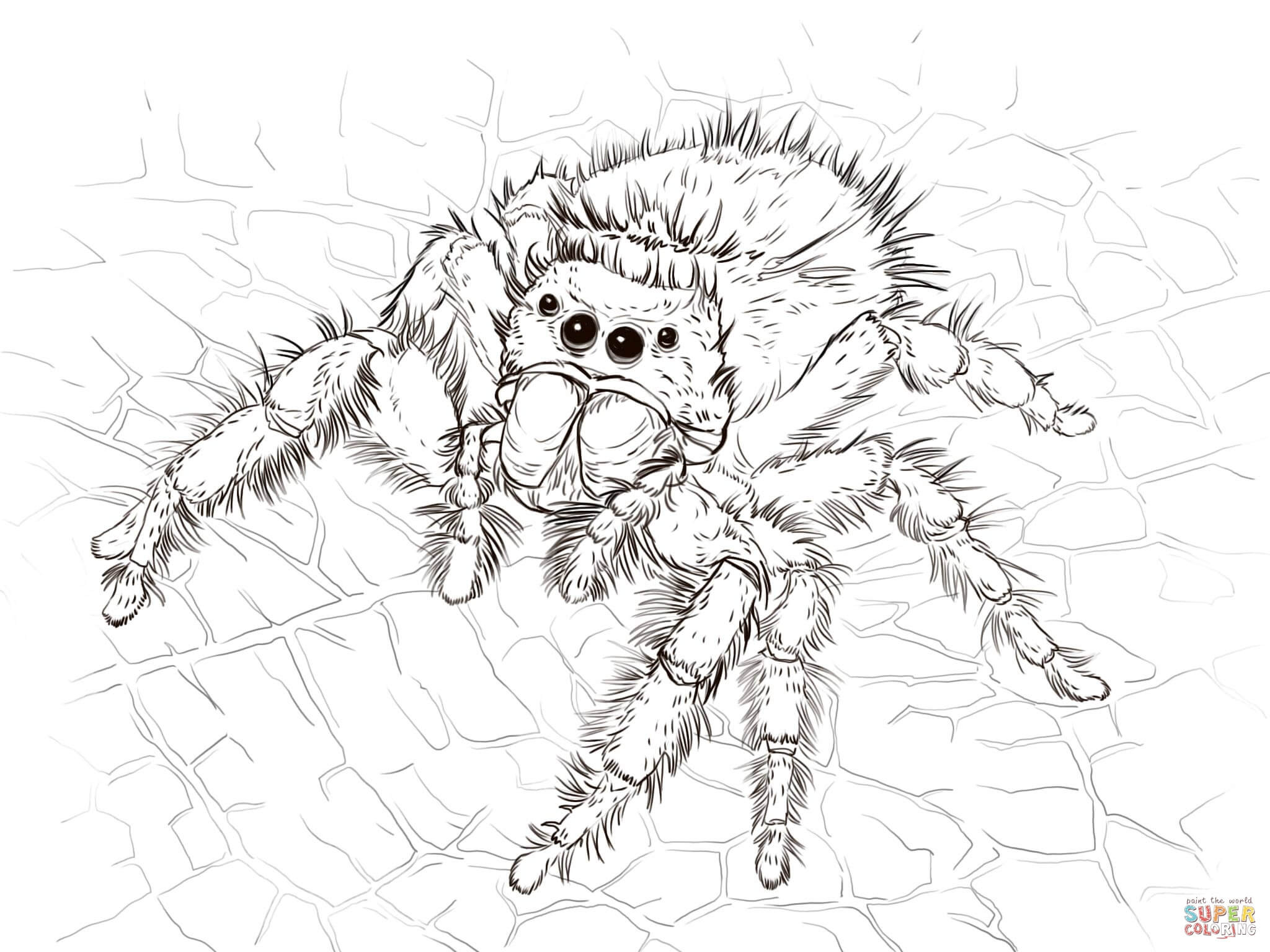 Best ideas about Spider Printable Coloring Pages . Save or Pin Daring Jumping Spider coloring page Now.