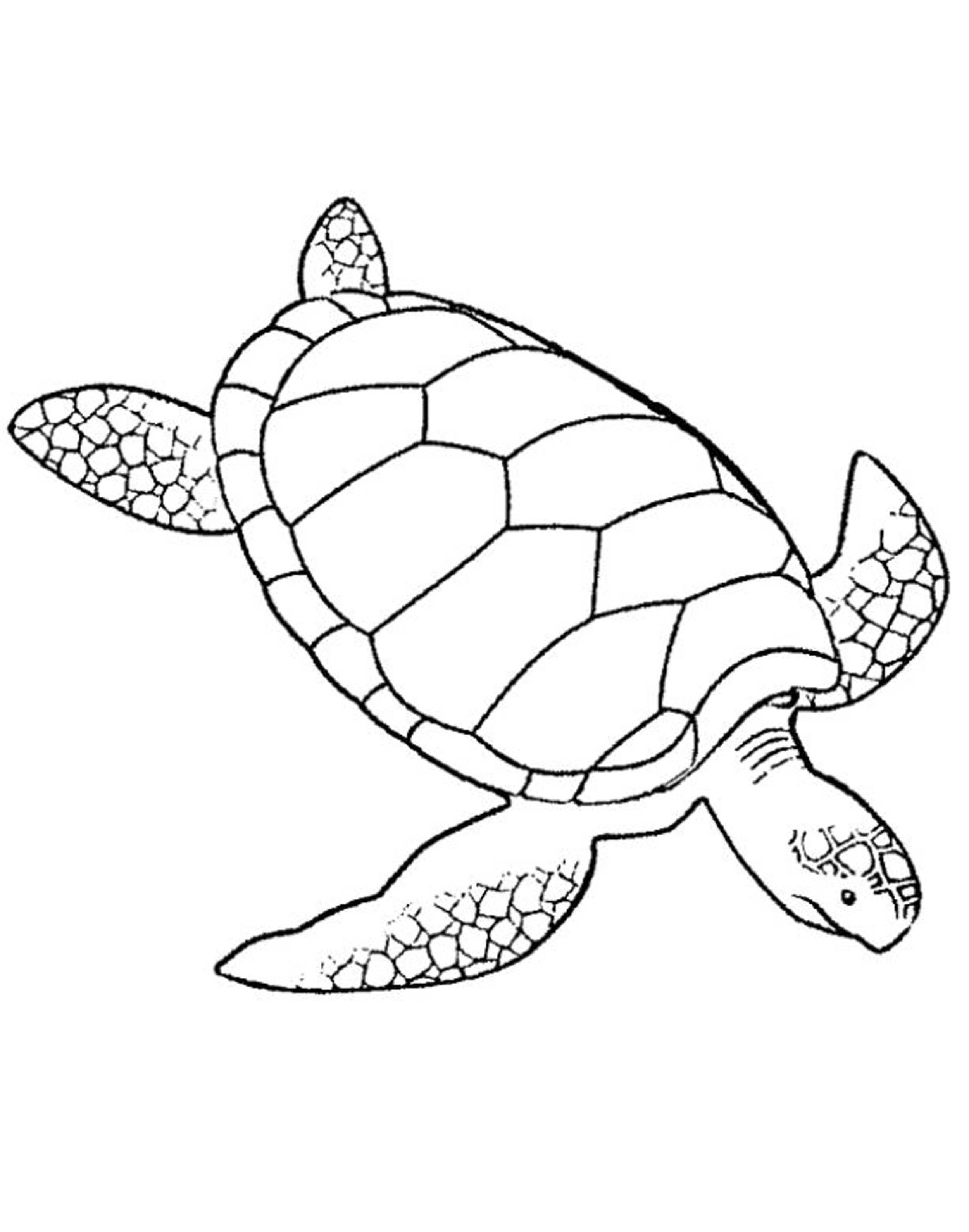 Best ideas about Turtle Coloring Pages For Adults . Save or Pin ADULT COLORING PAGES TURTLE Coloring Home Now.