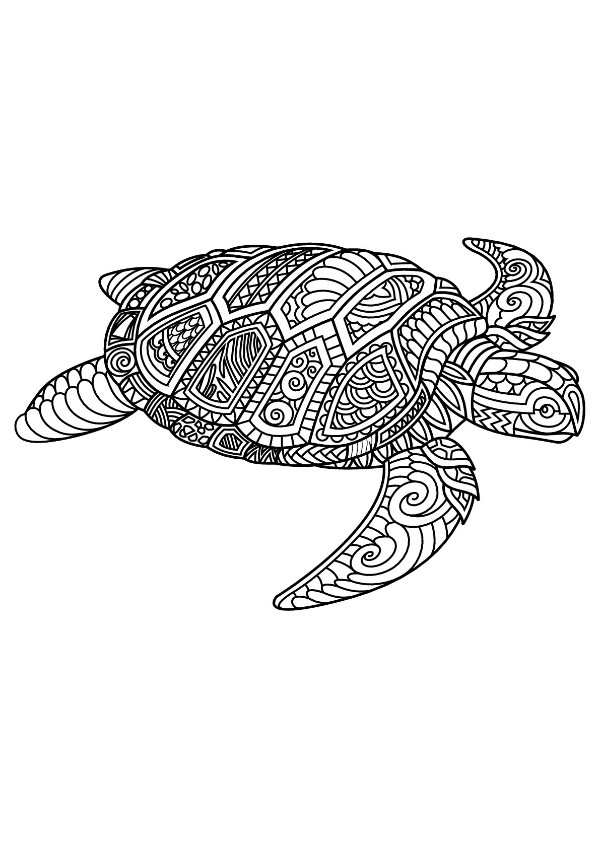 Best ideas about Turtle Coloring Pages For Adults . Save or Pin Free book turtle Turtles Adult Coloring Pages Now.