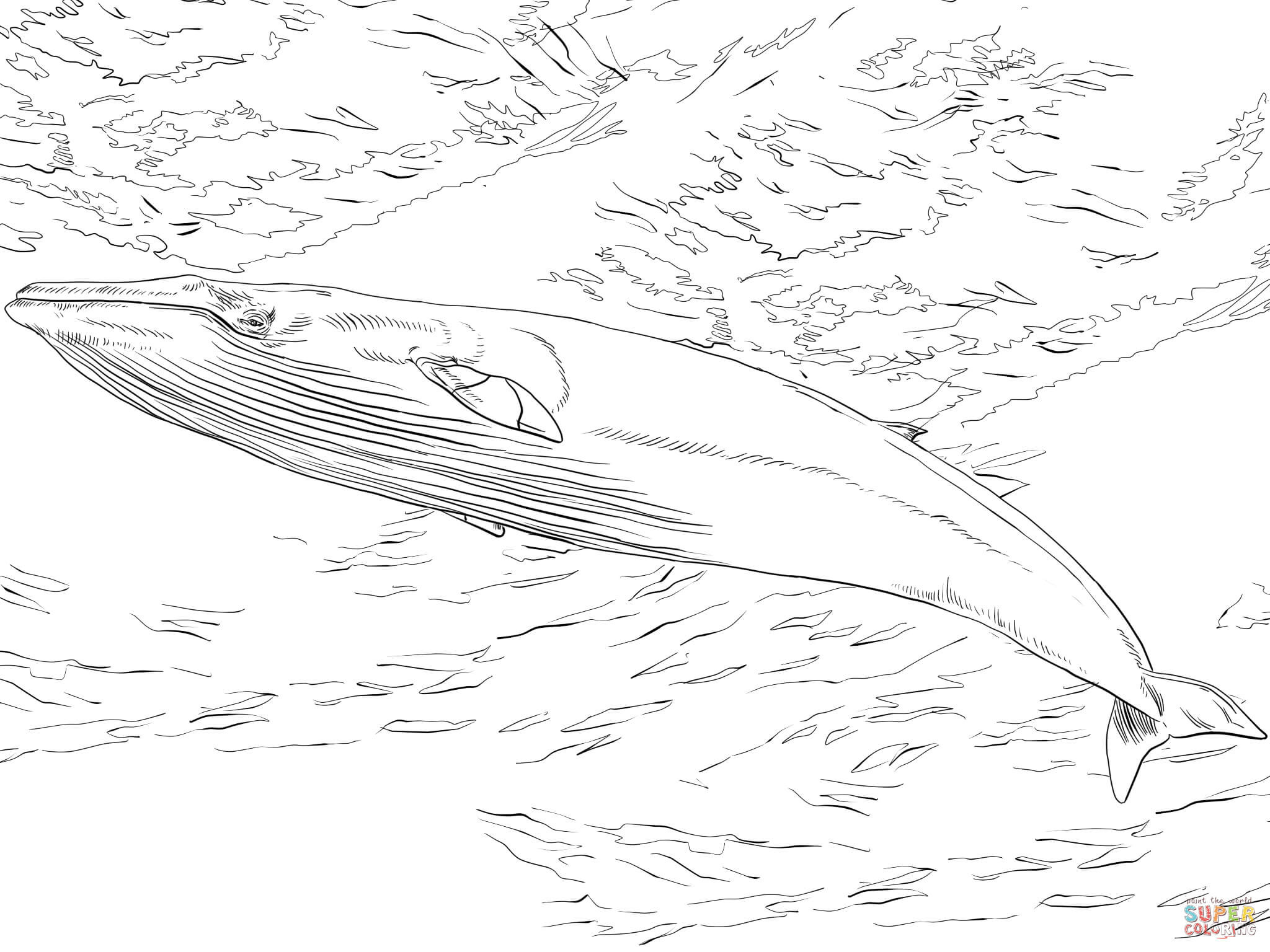 Best ideas about Whale Coloring Book Pages . Save or Pin Minke Whale coloring page Now.